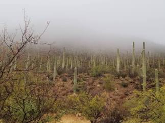 fog on cacti Hidden Canyon